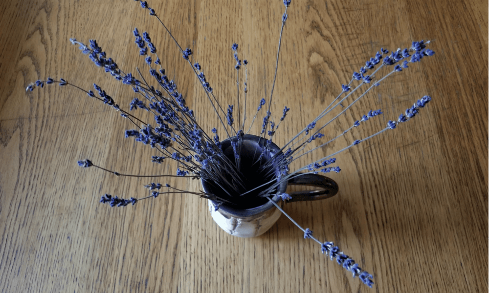 Laveanne Lavender Fields