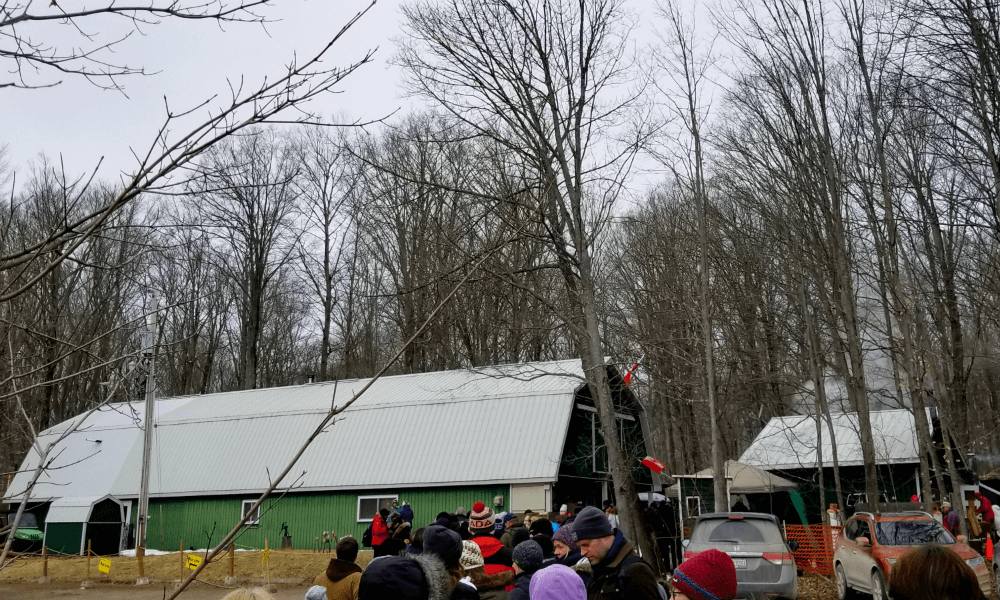Maple Syrup Festival in Warkworth