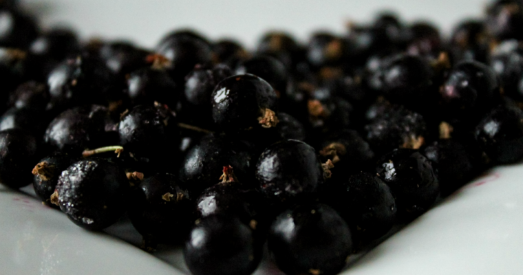 In Search of Black Currant – Forbidden American Fruit